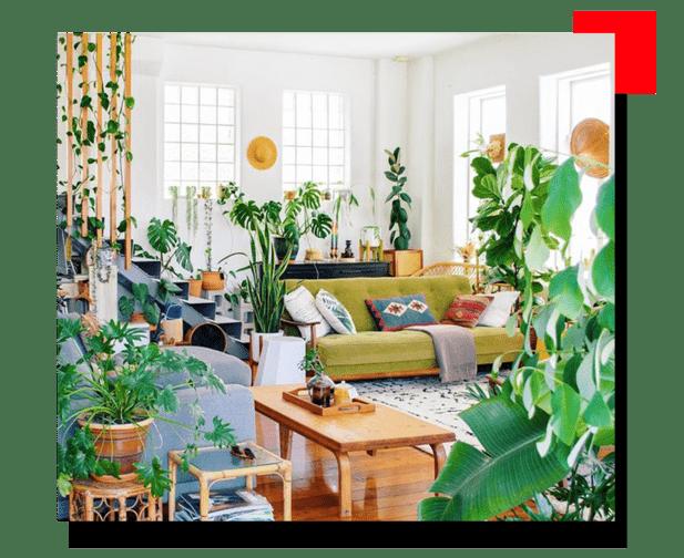 Plantas para living